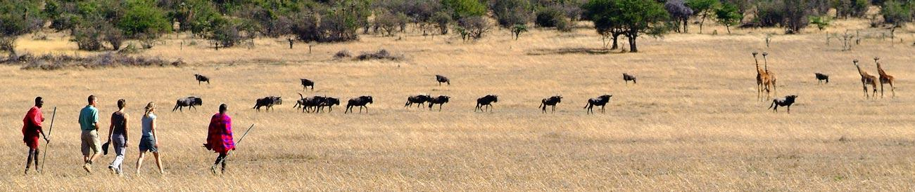 inside africa travel masai mara wildebeest migration