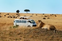 safari van in the mara