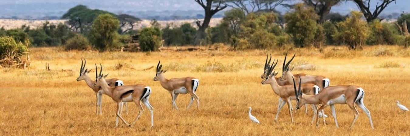 Inside Africa Travel Budget Safaris