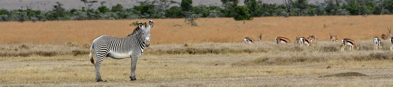14 Days Kenya Budget Safari and Beach Holiday in South Coast